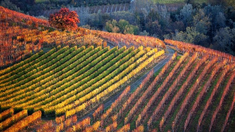 Barolo, Barbaresco & Roero – Go Wine